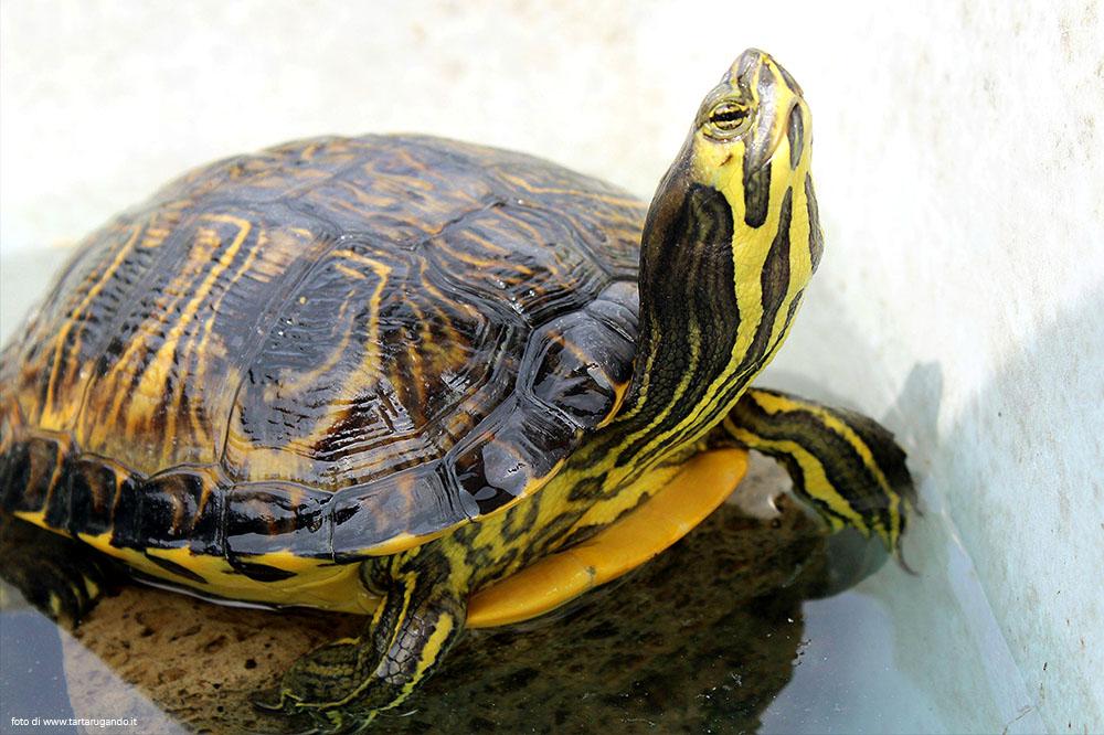 Quanto è timida questa tartaruga